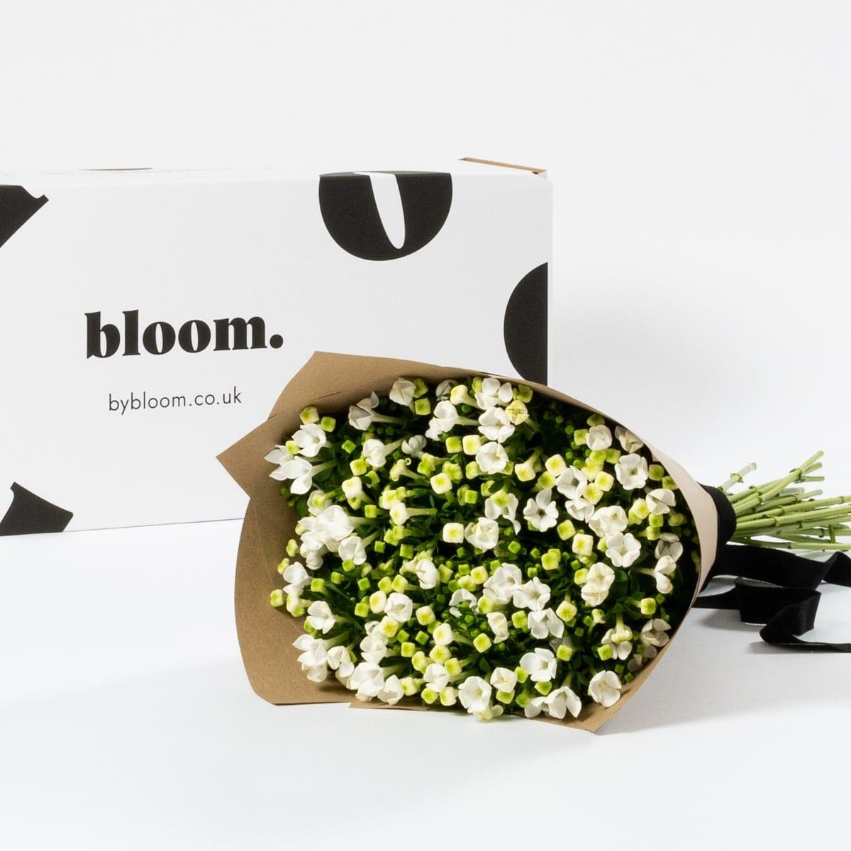 Bloom Flower Delivery | Porcelain White Bouvardia