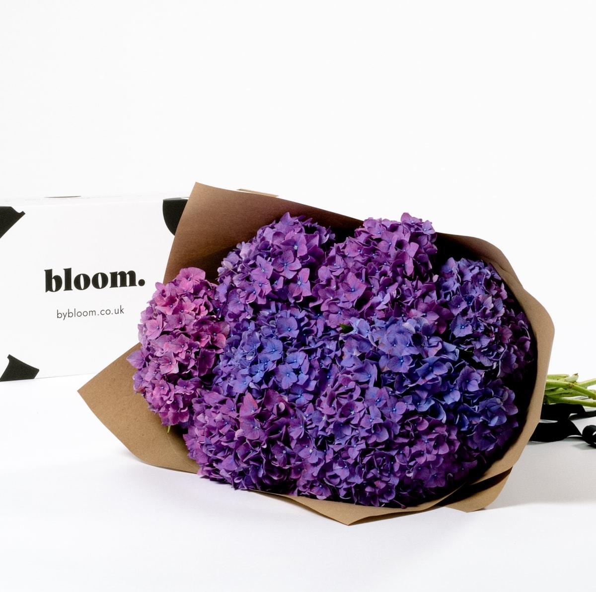 Bloom Flower Delivery | Purple Rodeo Hydrangea