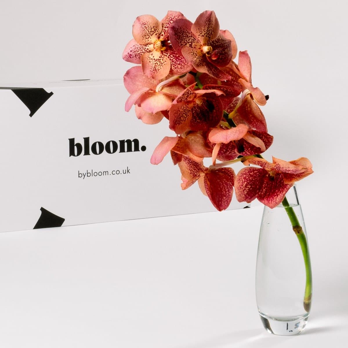 Bloom Flower Delivery | Magenta Haze Vanda Orchid