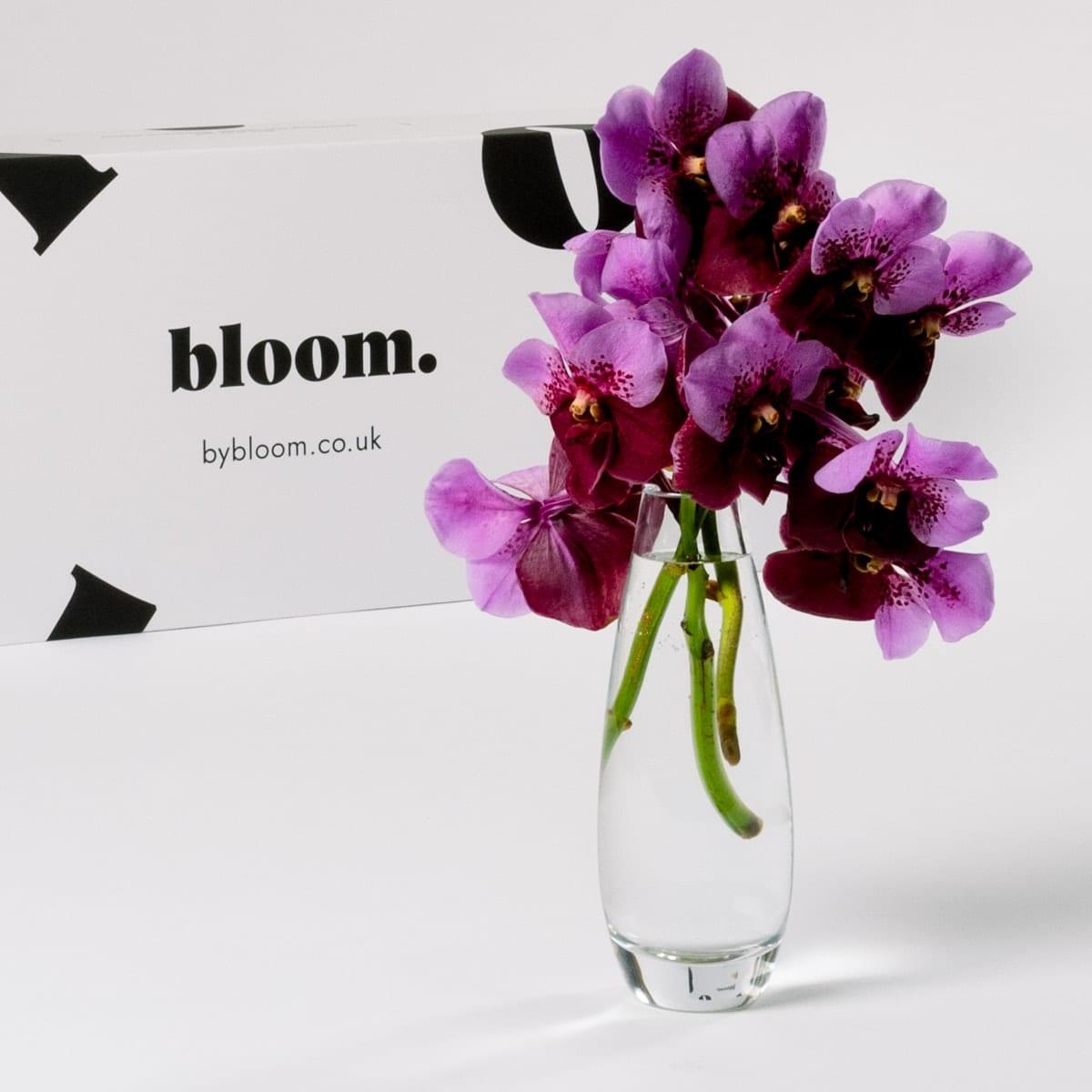 Bloom Flower Delivery | Muddled Grape Vanda Orchid