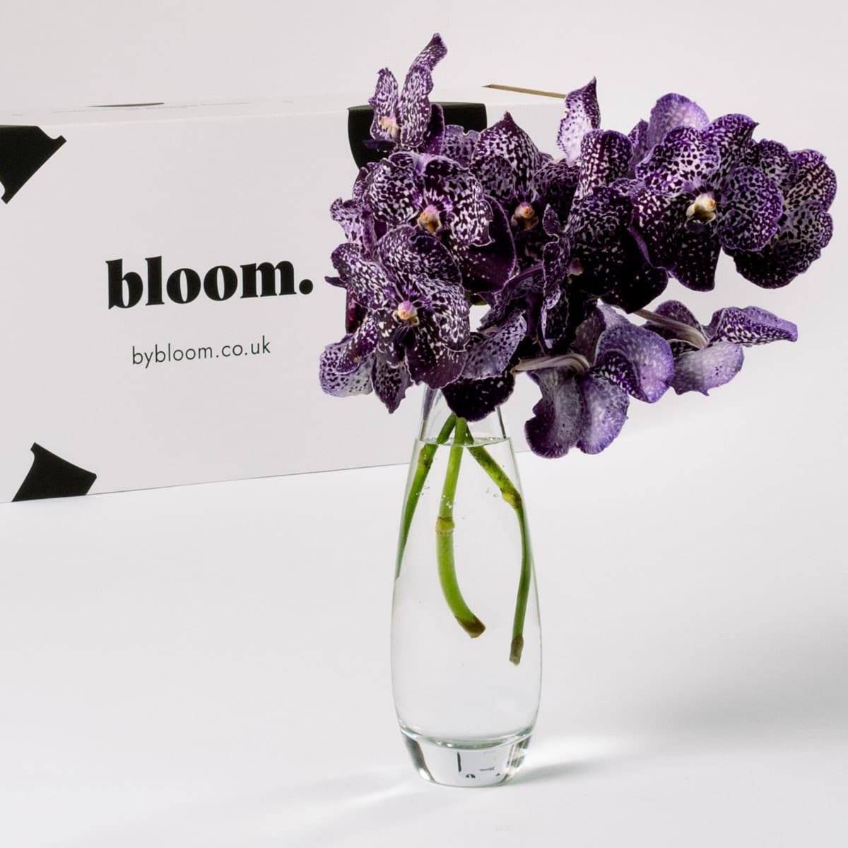 Bloom Flower Delivery | Purple Magic Vanda Orchid