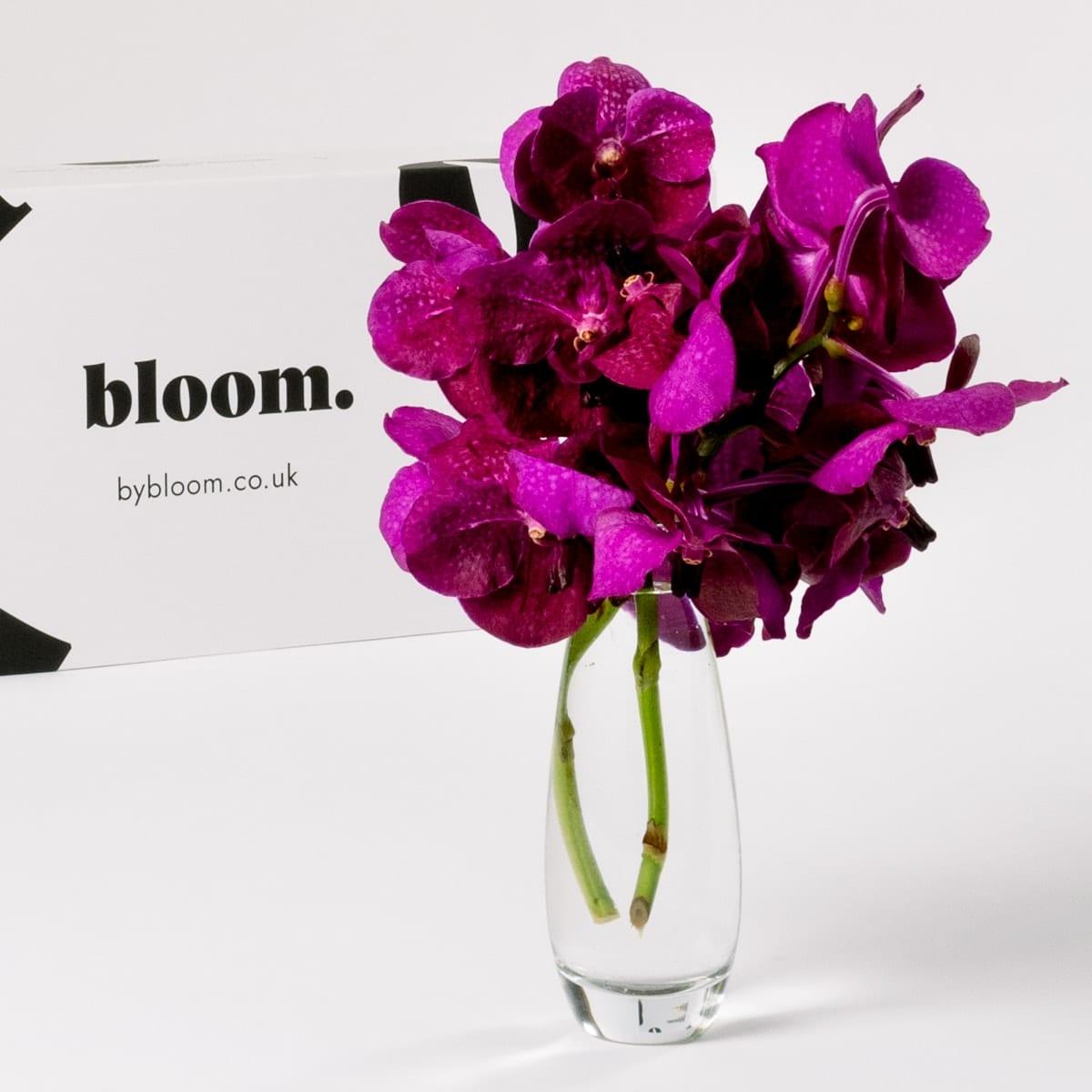 Bloom Flower Delivery | Cerise Pink Vanda Orchid