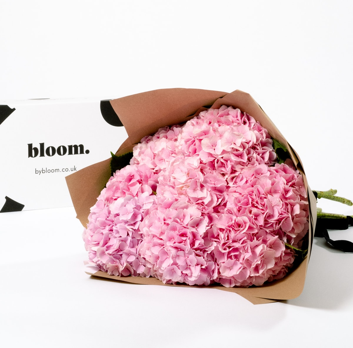 Bloom Flower Delivery   Cotton Candy Pink Hydrangea