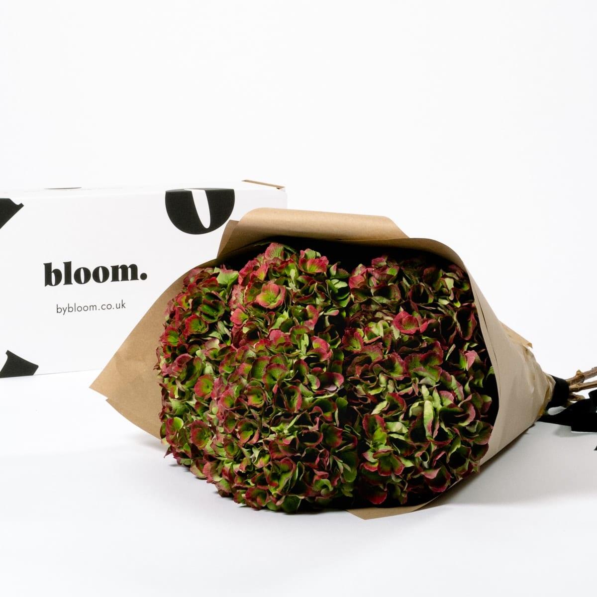 Bloom Flower Delivery | Autumn Hydrangea