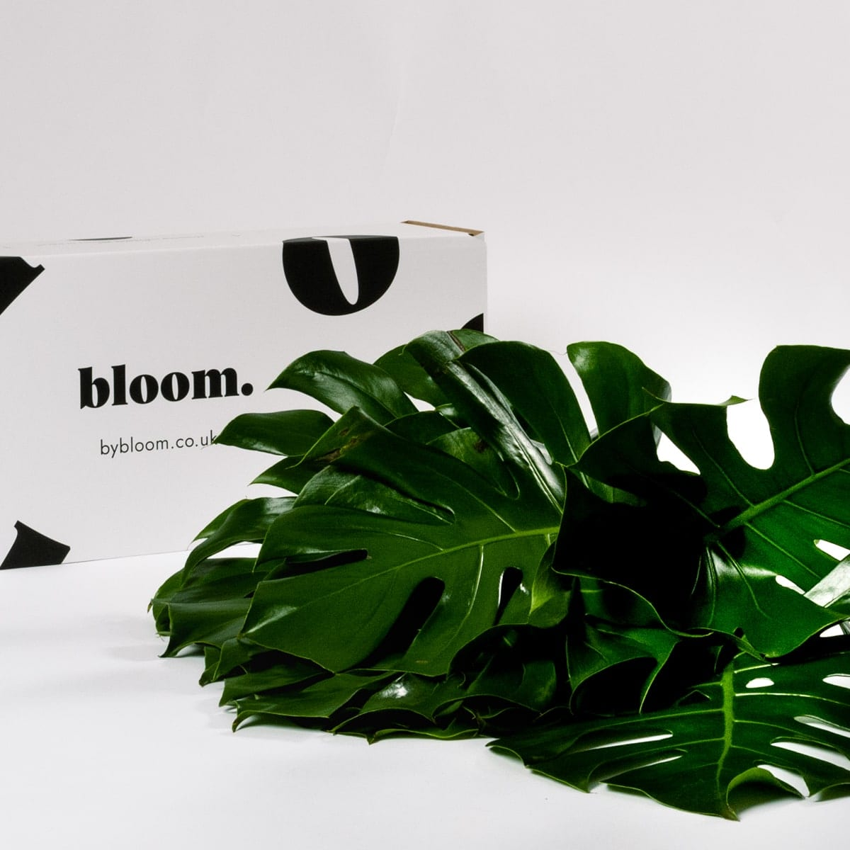 Bloom Flower Delivery | Green Monstera Leaf