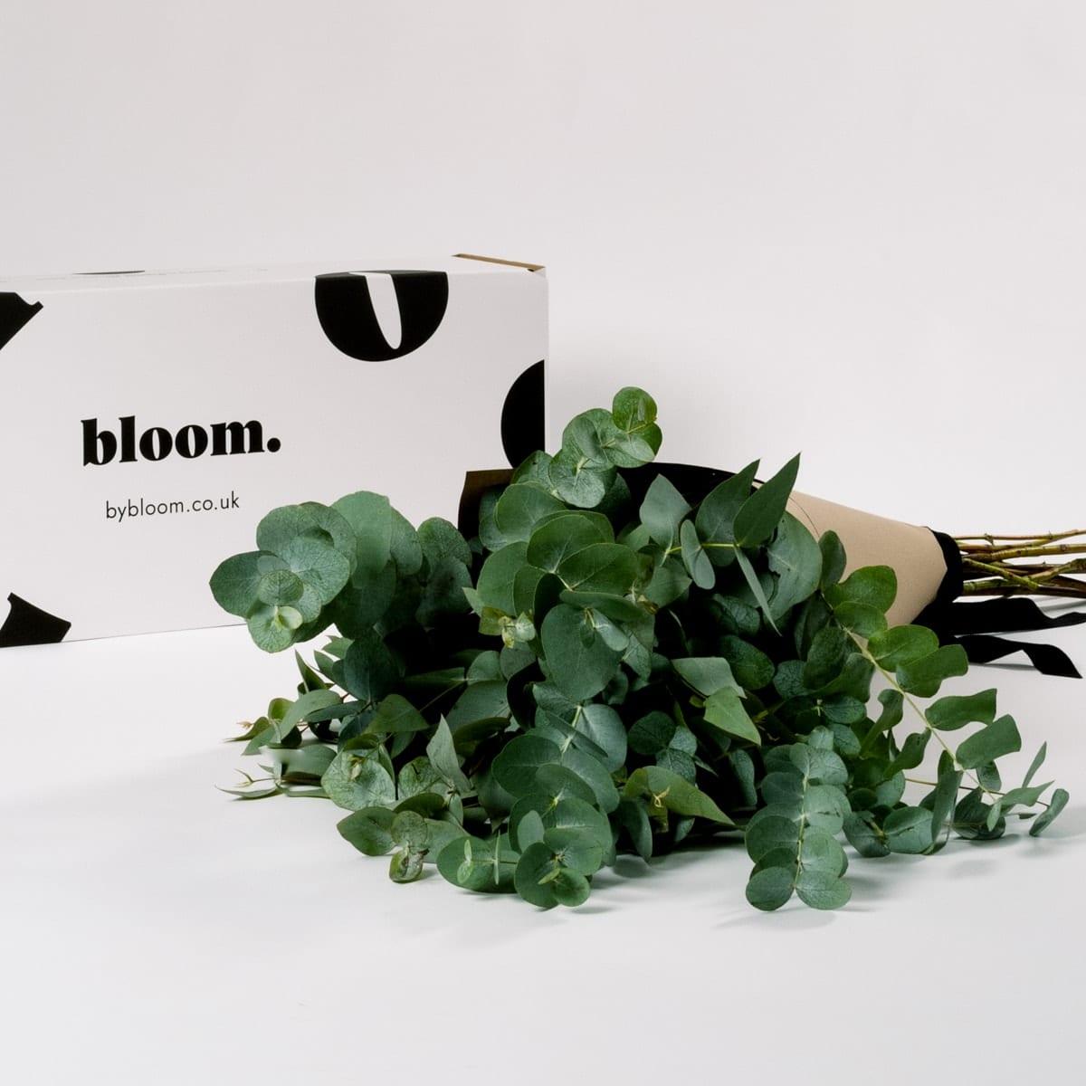 Bloom Flower Delivery | Green Eucalyptus
