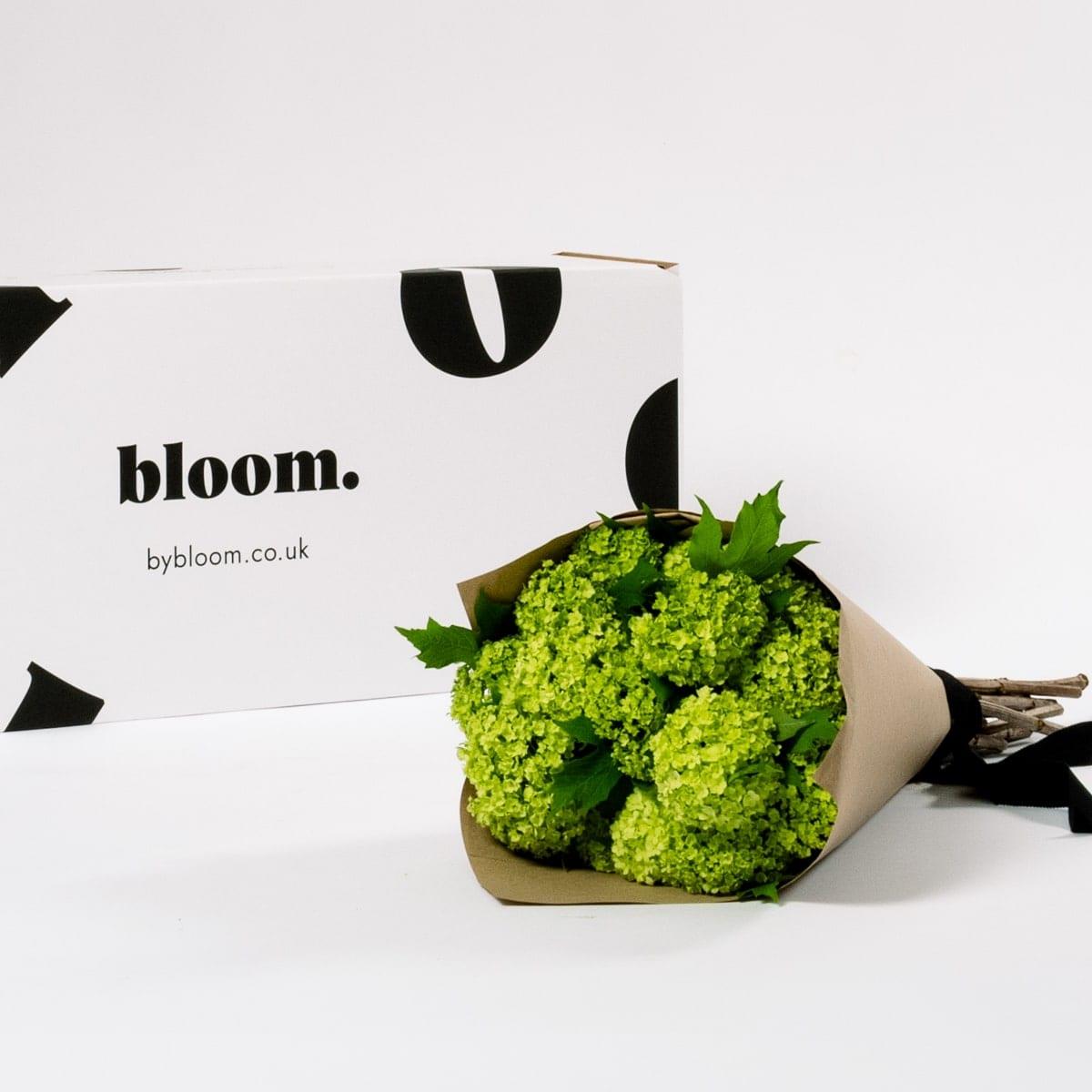 Bloom Flower Delivery | Green Viburnum