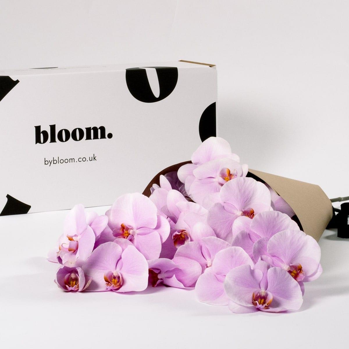Bloom Flower Delivery | Ballet Slipper Pink Phalaenopsis Orchid