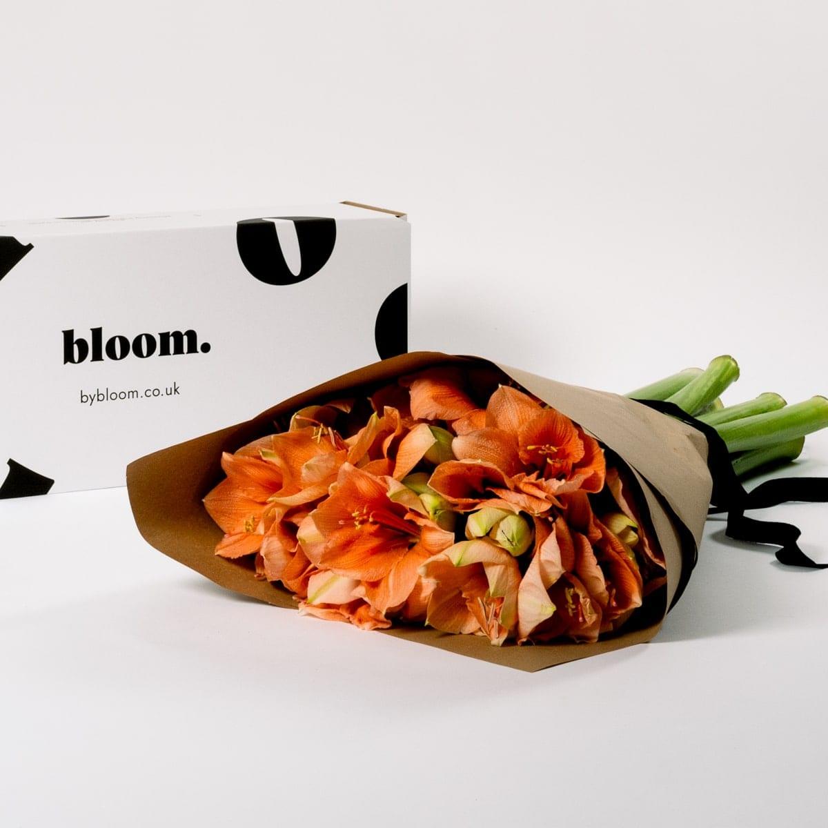 Bloom Flower Delivery | Peach Sorbet Amaryllis