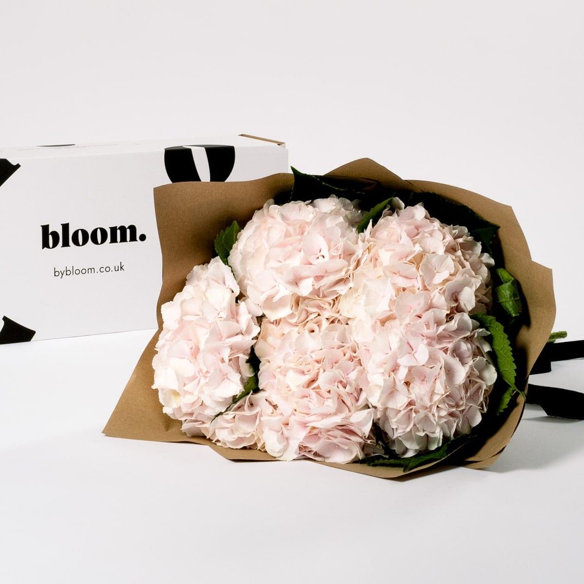 Bloom Flower Delivery   Ballet Slipper Pink Hydrangea