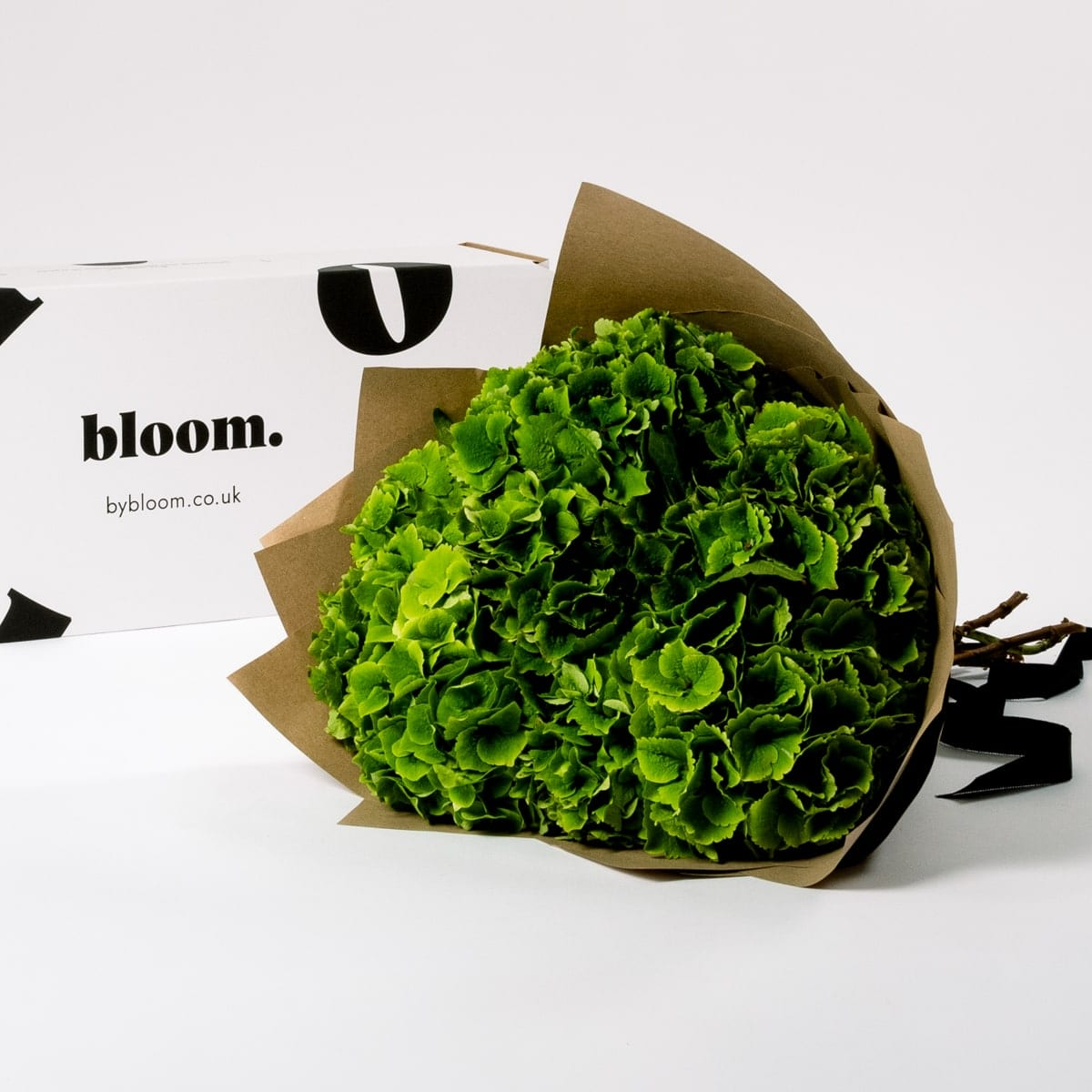 Bloom Flower Delivery   Pickle Green Hydrangea