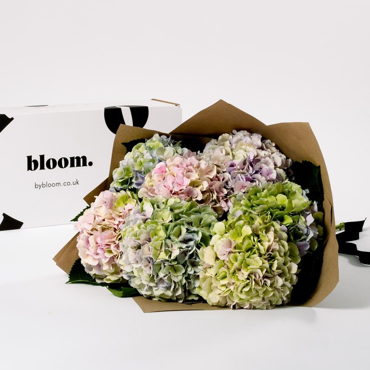 Bloom Flower Delivery   Pastel Mix Hydrangea