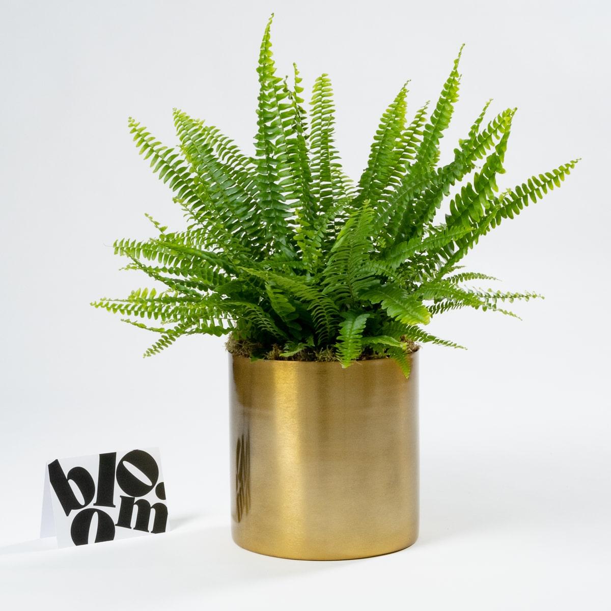 bloom - Tall Brass Plant Pot & Vase