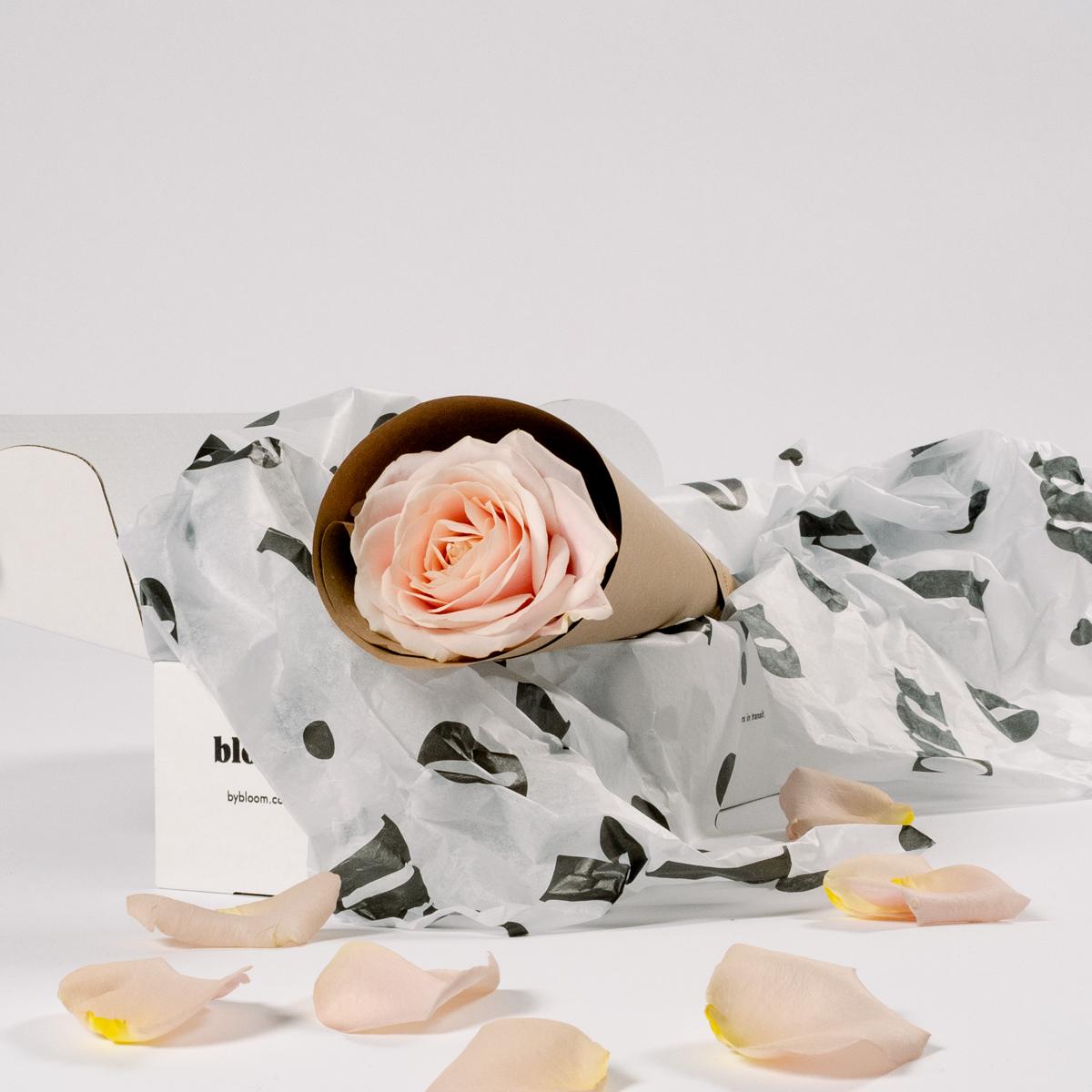 Bloom Flower Delivery | Single Stem Light Pink Rose